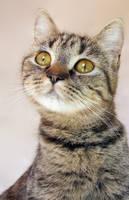 Cat portrait by Zeroxy92