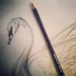 a swan...