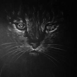 Eyes in the dark.