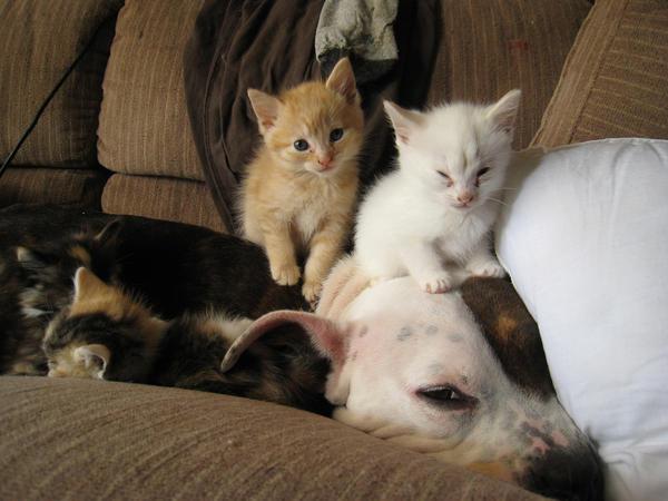 Kiwi, the kitten sitter still by DreamEyce