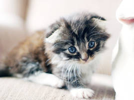 Itty Bitty Kittie by DreamEyce