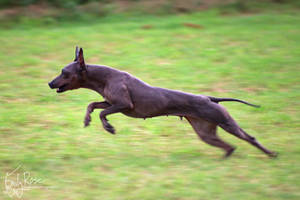 Gen on the Run