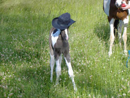 Baby Horse in Cowboy Hat