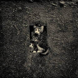Kittens in the hole