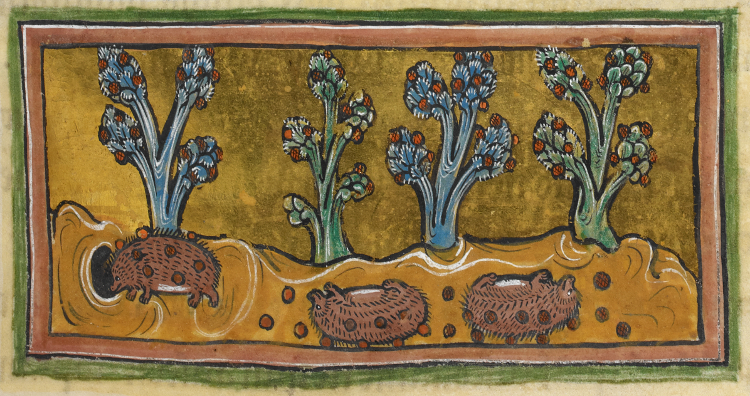 Hedgehogs - British Library Royal 12 F xiii f45r ( by Delice1941