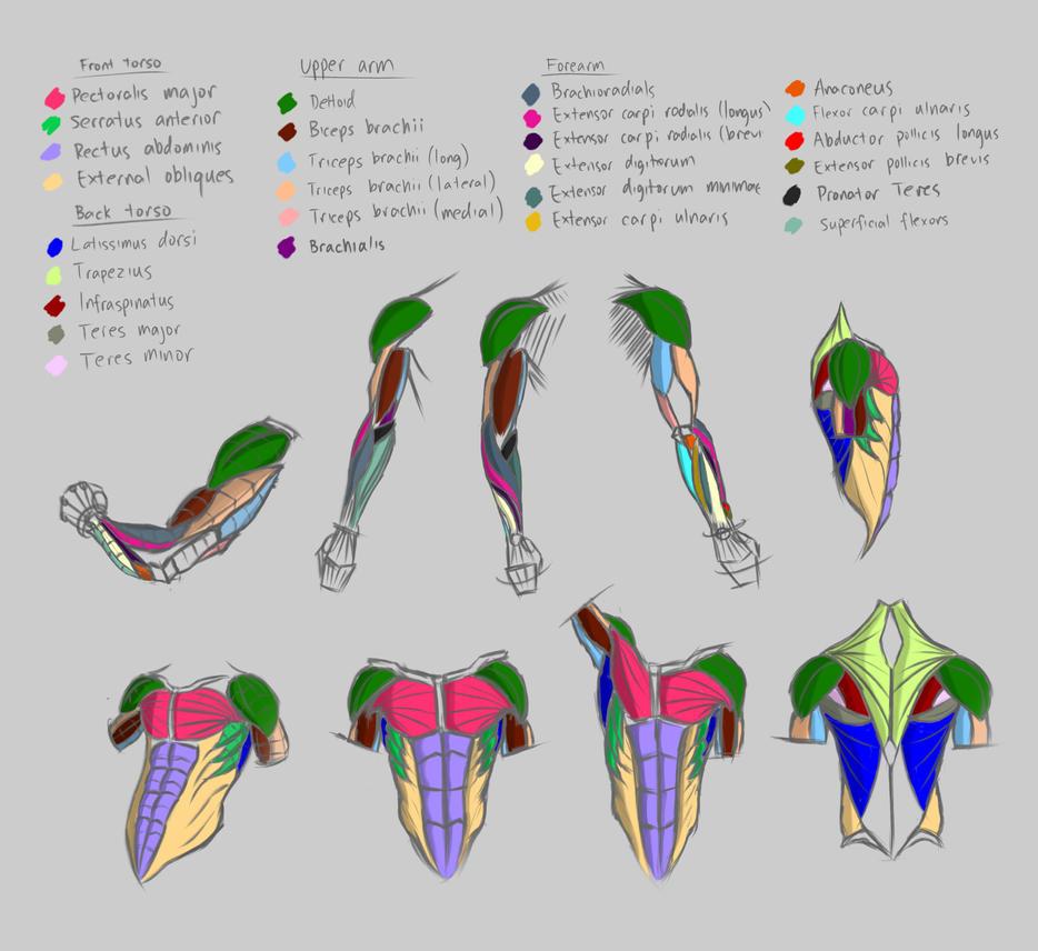 2-7-15 Anatomy Study by Patchy9