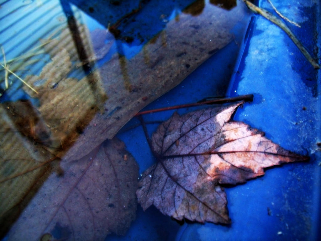 puddle of blue by Foreigner227