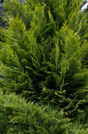 Green-stock
