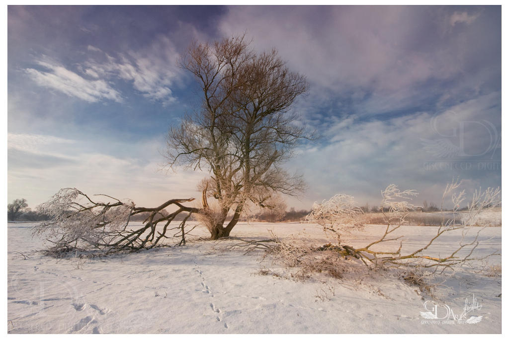 Tree in the Winter by greenfeed
