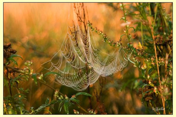 mornings breath