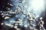 Fragile Dreams by Elanor90