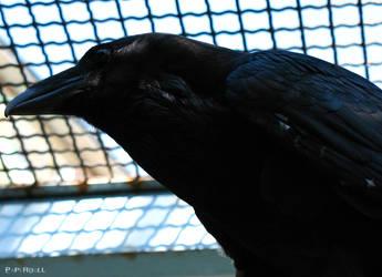 Raven by PaPeRDoLLLL
