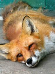 Foxy v2 by PaPeRDoLLLL