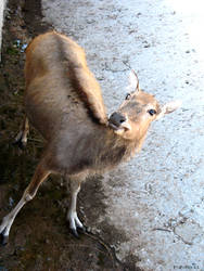 Curious deer by PaPeRDoLLLL