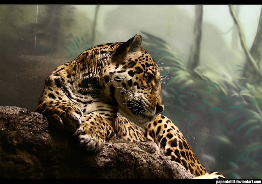 Jaguar by PaPeRDoLLLL