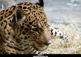 Jaguar .2 by PaPeRDoLLLL