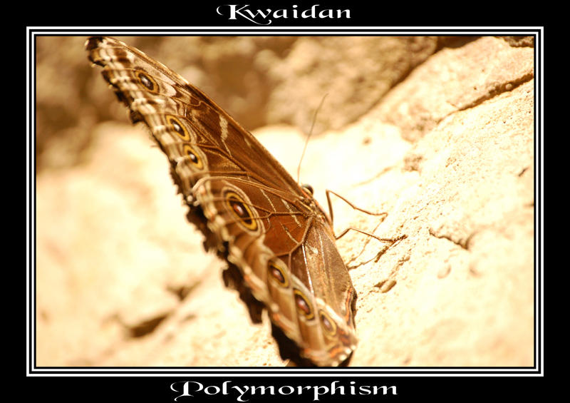 Kwaidan Polymorphism by Arggg