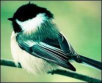Birdie by Makivka