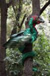 Male quetzalcoalt