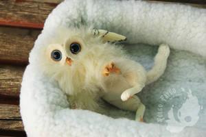 Domestic gryphon kitten / Cria de grifo domestico by AlvaroFuegoFatuo