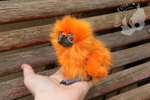 Phoenix chick (for sale)