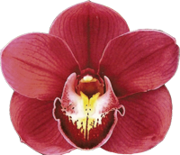 orchid3.png by daynielleEdits on DeviantArt