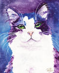 Pretty Kitty Kitty
