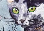 ACEO Black Cat Sparkle