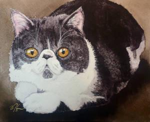 Gretchen's grandcat #2