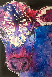 Tie Dyed Calf