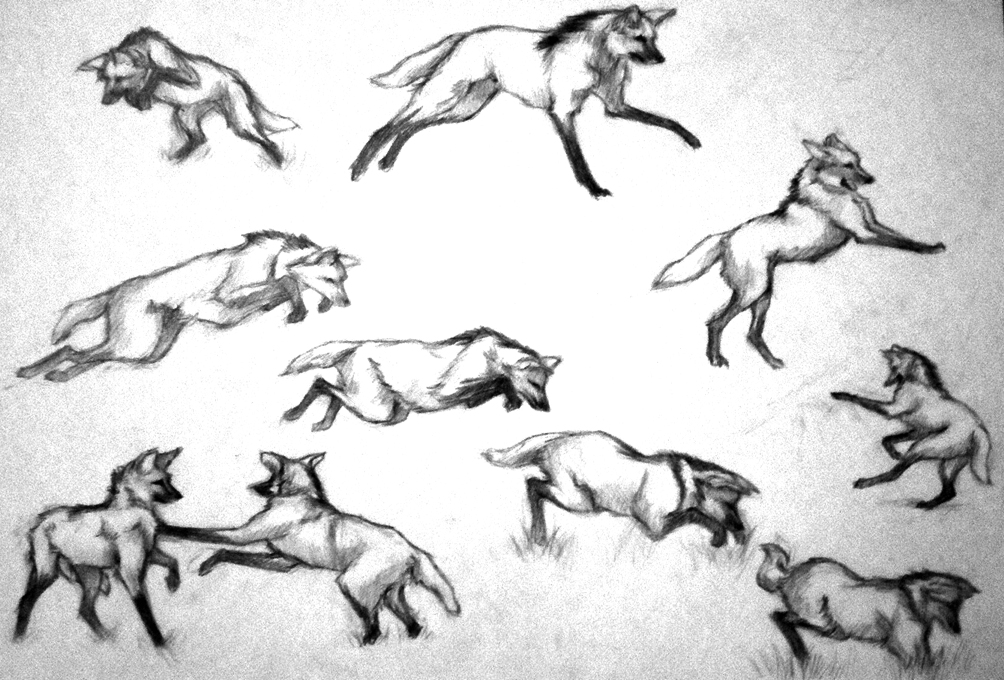 How To Draw A Maned Wolf: Maned Wolf Pencil Studies By Deathscent On DeviantArt