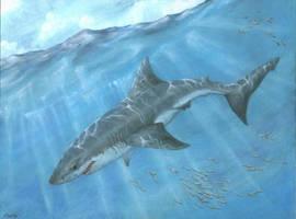 shark by bushande