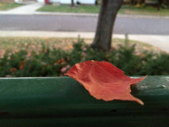 an autumn leaf by tolva