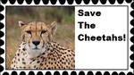 Save The Cheetahs Stamp by RedqueenAllison