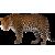 Leopard icon by RedqueenAllison