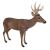 Deer icon.2