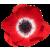 Flower icon.4
