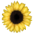 Flower icon.5