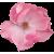 Flower icon.9 by RedqueenAllison