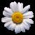 Flower icon.15 by RedqueenAllison