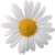 Flower icon.16