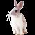 Rabbit icon.12 by RedqueenAllison
