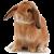 Rabbit icon.16