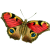 Butterfly icon.10