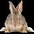 Rabbit icon.18 by RedqueenAllison