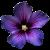 Flower icon.26