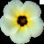 Flower icon.35