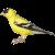 Finch-Bird icon by RedqueenAllison