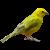 Finch-Bird icon.2 by RedqueenAllison