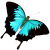 Butterfly icon.14